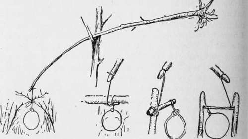 Pole-for-rabbit-snare-and-various-ways-of-setting-the-noose
